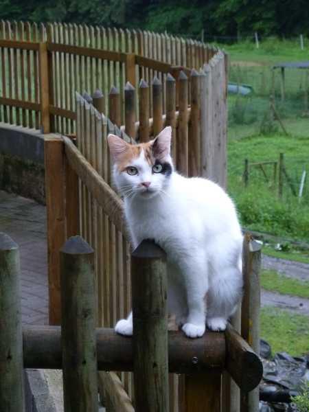 Katze Minka 7 2012