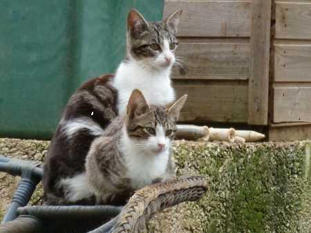 Wild Katzen